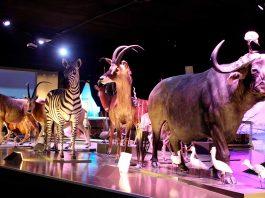 museo-evolucion-puebla